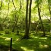 祇王寺の苔庭が美しすぎる!【白拍子の悲しき過去が眠る寺】【京都観光】