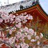 仁和寺の歴史と見所を簡単にわかりやすく【宇多天皇の想い】その1