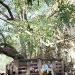 釈迦(ブッダ)が菩提樹の下で悟りを開くまで【四諦八正道とは?】
